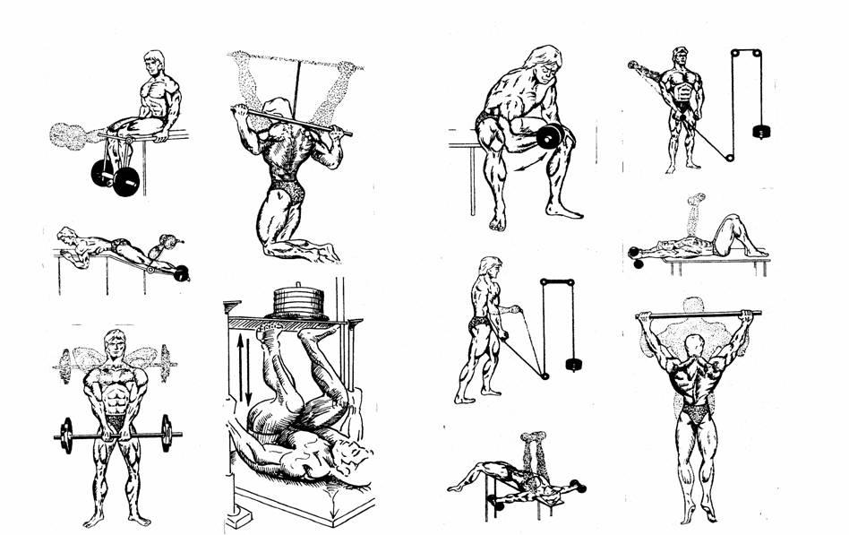 Движущие силы физических упражнений